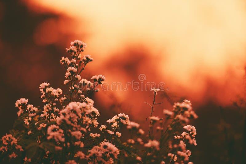 Silueta de la flor del vintage en fondo de la naturaleza de la salida del sol de la puesta del sol imagenes de archivo