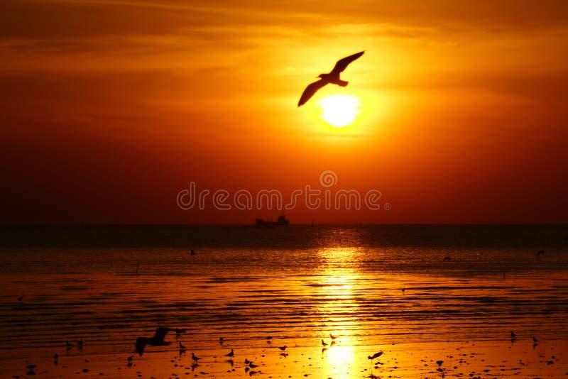 Silueta de la gaviota que vuela sobre el océano en la puesta del sol foto de archivo
