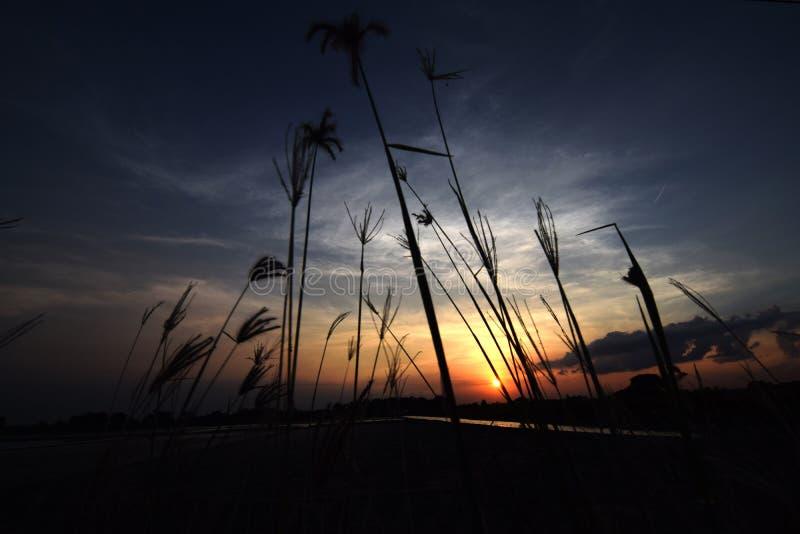 Silueta de la hierba con puesta del sol en la charca foto de archivo