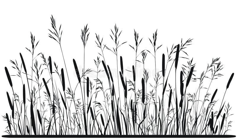 Silueta de la hierba de prado stock de ilustración