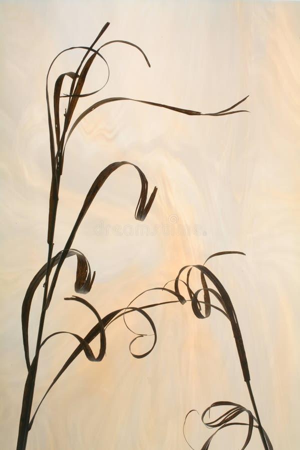Silueta de la hierba secada fotografía de archivo