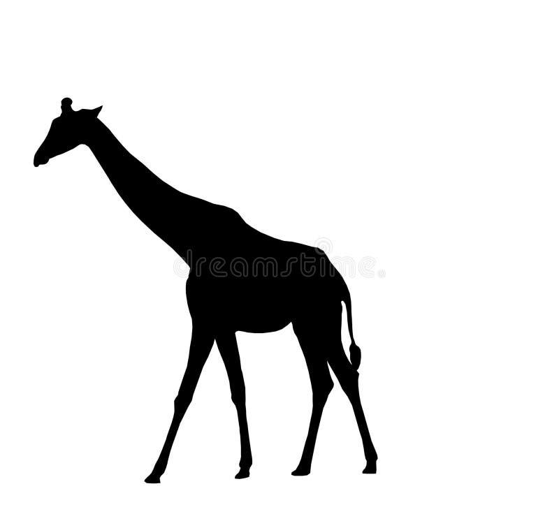 Silueta de la jirafa stock de ilustración