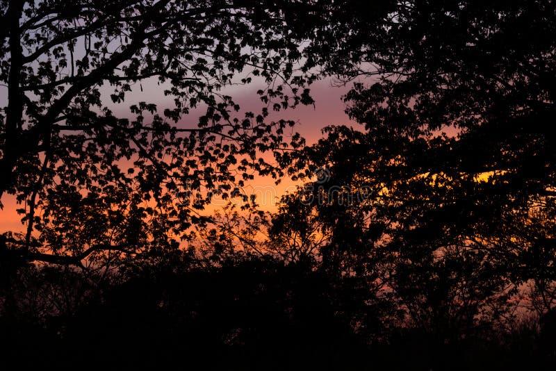 Silueta de la lengua del árbol de los lebbeckSiris del Albizia, del ` s de la mujer, árboles del lebbeck de la mimosa y cielo cre foto de archivo libre de regalías