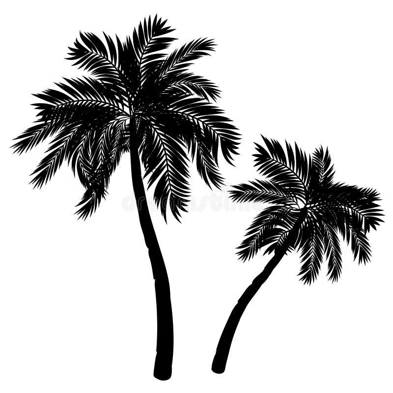 Silueta de la palmera ilustración del vector