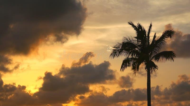 Silueta de la palmera que sopla en viento contra puesta del sol dramática foto de archivo