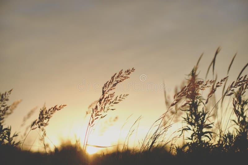 Silueta de la planta de la salida del sol delante del sol foto de archivo libre de regalías