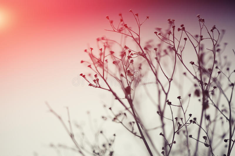 Silueta de la planta del invierno en la puesta del sol fotografía de archivo libre de regalías