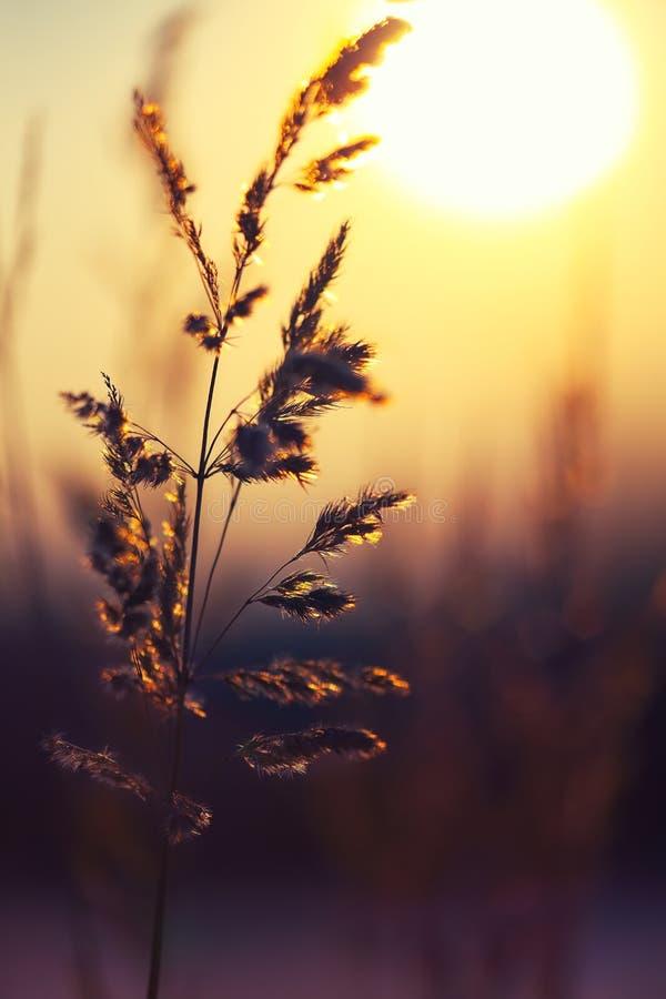 Silueta de la planta del invierno en la puesta del sol foto de archivo