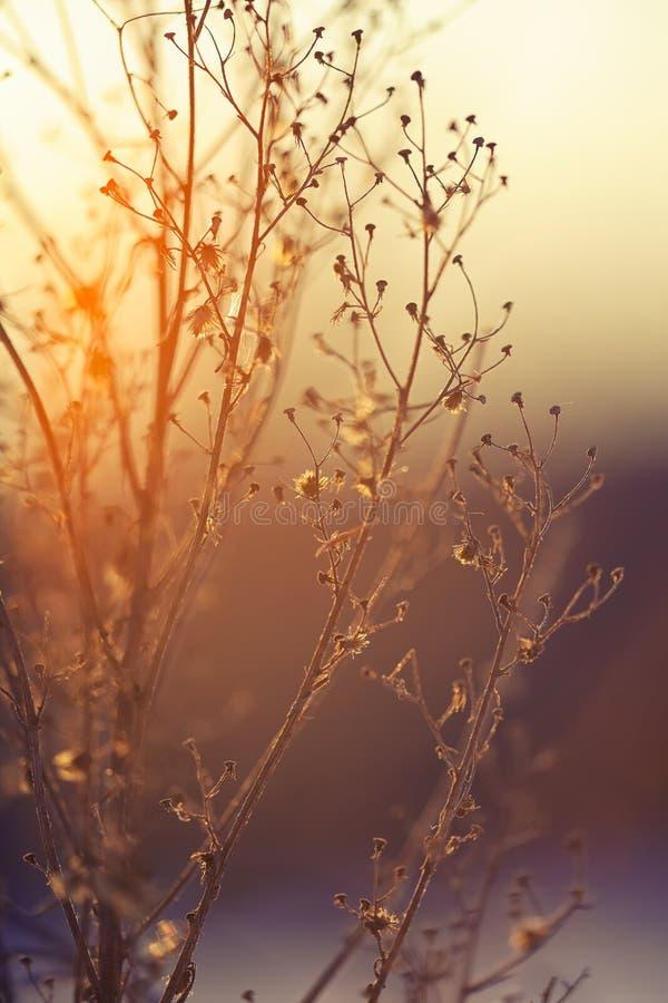Silueta de la planta del invierno en la puesta del sol fotos de archivo