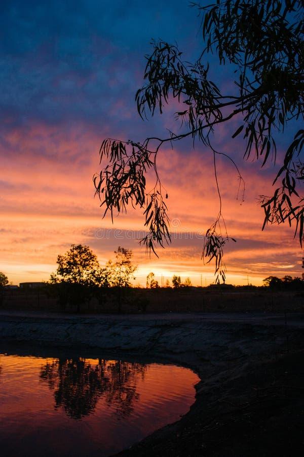 Silueta de la puesta del sol de Gumtree imágenes de archivo libres de regalías