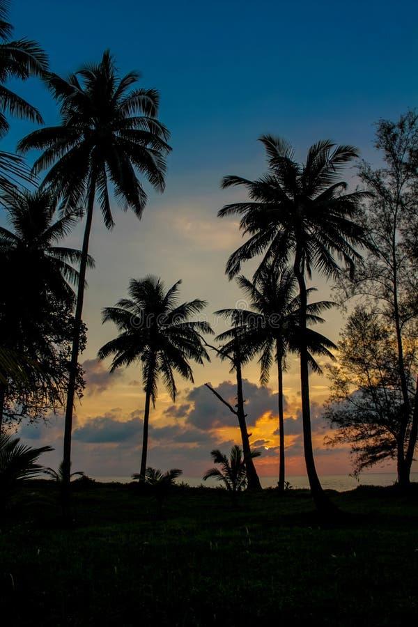 Silueta de la puesta del sol de las palmeras en el complejo playero tropical foto de archivo