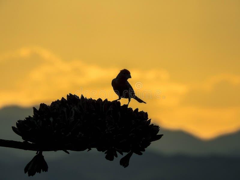 Silueta de la puesta del sol del pájaro imagen de archivo libre de regalías