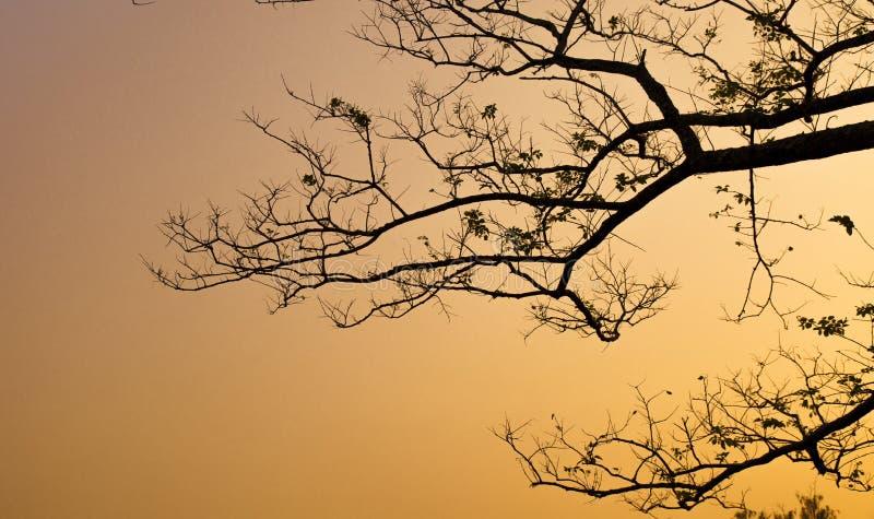 Silueta de la rama de árbol imágenes de archivo libres de regalías