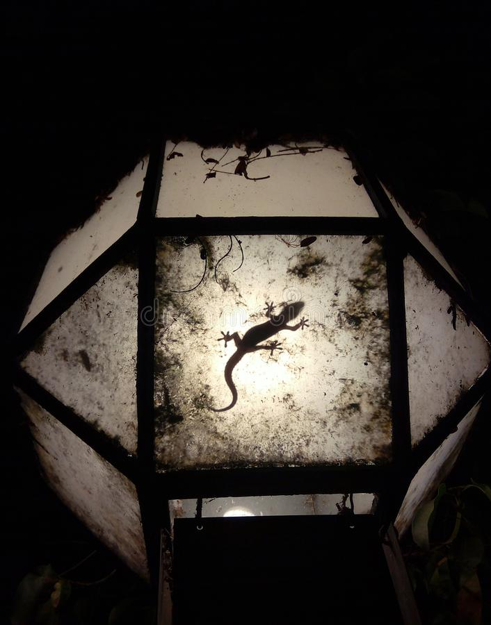 Silueta de la salamandra de la noche en la lámpara imágenes de archivo libres de regalías