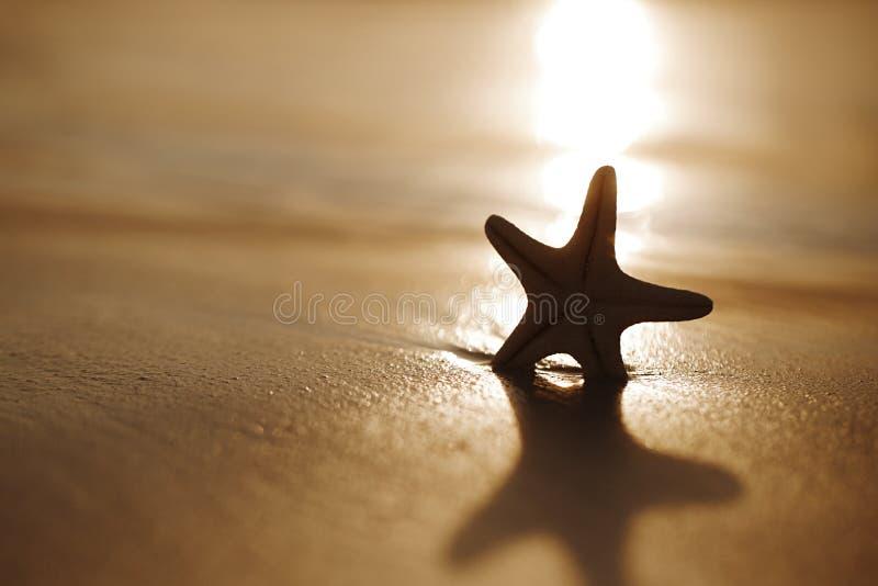 Silueta de las estrellas de mar de la estrella de mar en la playa de la puesta del sol imágenes de archivo libres de regalías