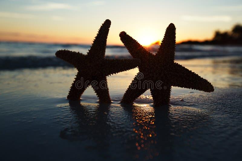 Silueta de las estrellas de mar de la estrella de mar en la playa de la salida del sol imagen de archivo libre de regalías