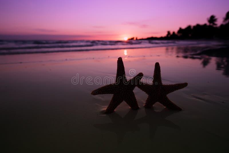 Silueta de las estrellas de mar de la estrella de mar en la playa de la salida del sol fotos de archivo libres de regalías