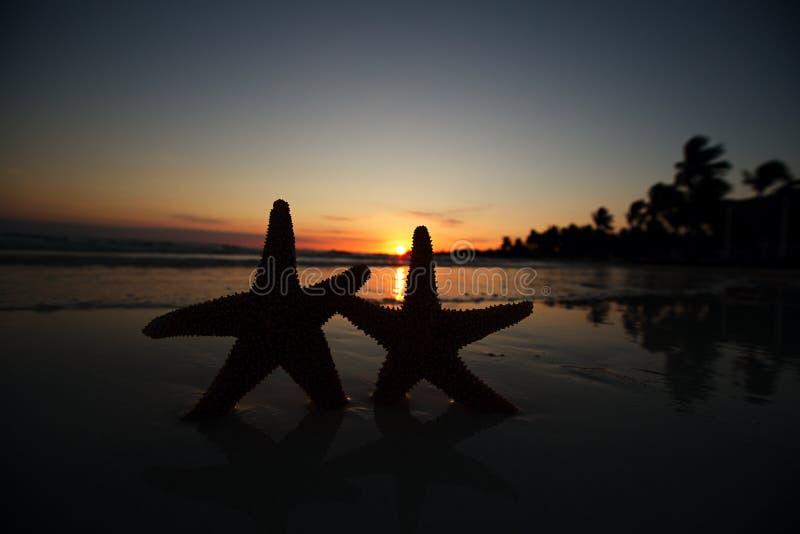 Silueta de las estrellas de mar de la estrella de mar en la playa de la salida del sol foto de archivo