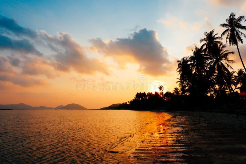 Silueta de las palmeras del coco en la playa en el sol de oro tropical imagenes de archivo