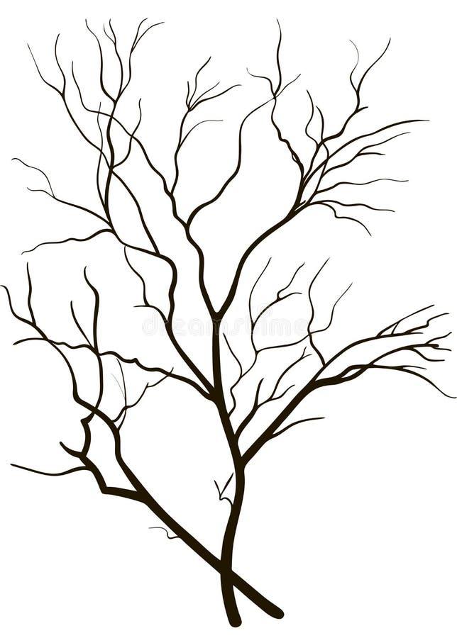 Silueta de las ramas de árbol imágenes de archivo libres de regalías