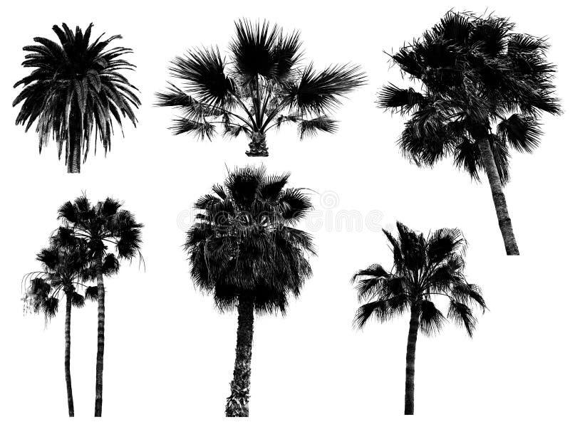 Silueta de los árboles de palmas foto de archivo