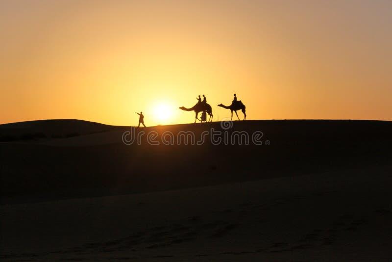 Silueta de los camellos que caminan en desierto durante puesta del sol fotografía de archivo libre de regalías