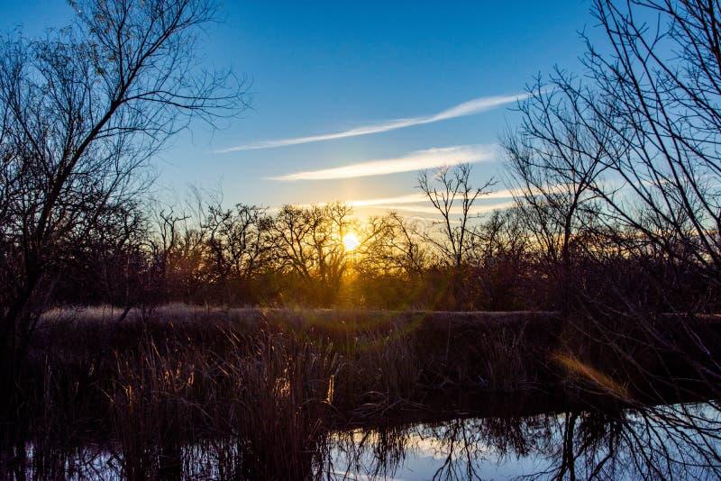 Silueta de oro del árbol del lago hour fotografía de archivo