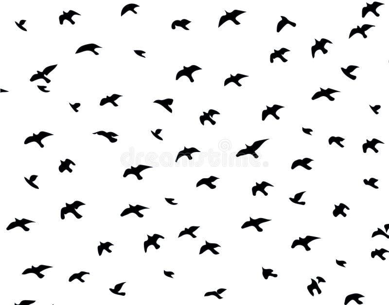 Silueta de pájaros fotografía de archivo libre de regalías