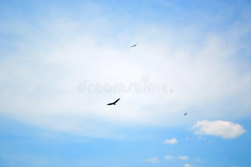 Silueta de pájaros en vuelo imágenes de archivo libres de regalías