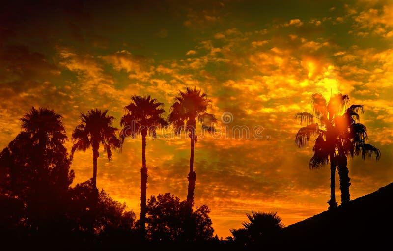 Silueta de palmeras en la puesta del sol foto de archivo libre de regalías