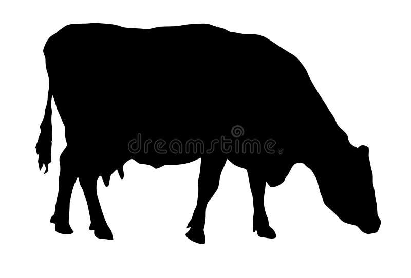 Silueta de pastar la vaca imagen de archivo