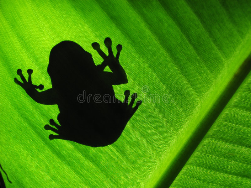Silueta de Treefrog imagen de archivo