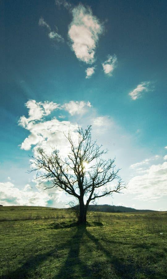 Silueta de un árbol imagenes de archivo