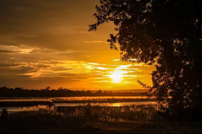 Silueta de un árbol oscuro delante de una puesta del sol de oro imágenes de archivo libres de regalías