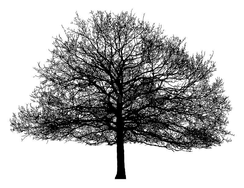 Silueta de un árbol solitario libre illustration