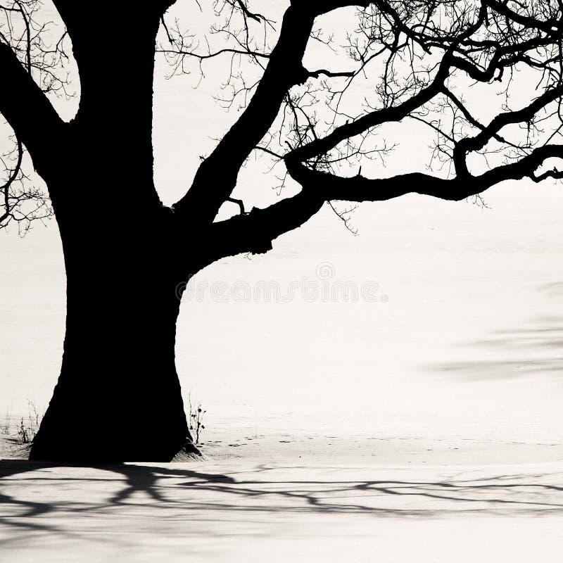 Silueta de un árbol viejo en el invierno imagen de archivo