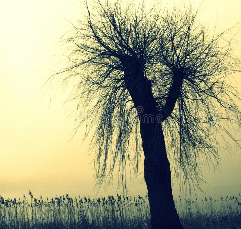 Silueta de un árbol y de precipitaciones con un resplandor imagen de archivo libre de regalías
