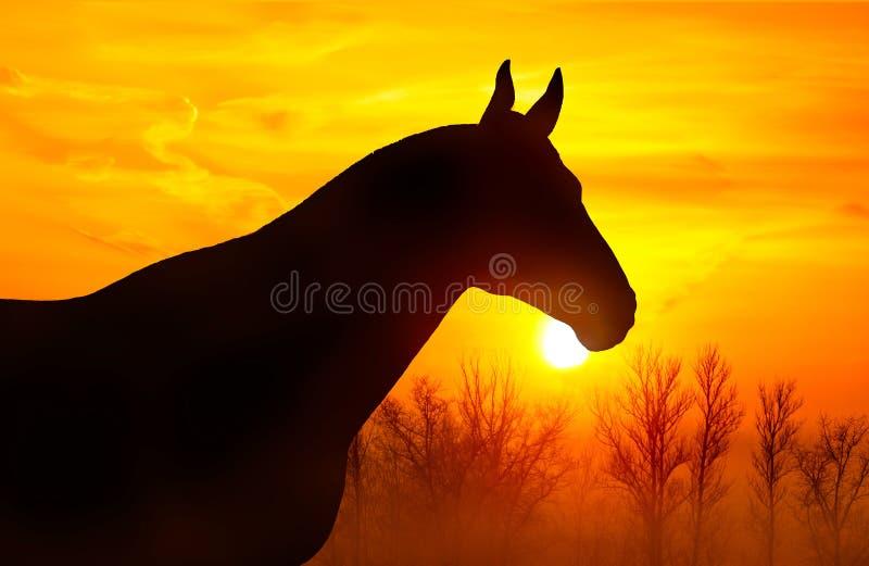 Silueta de un caballo en un fondo del cielo en la puesta del sol fotos de archivo libres de regalías
