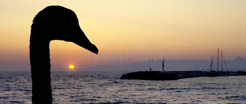 Silueta de un cisne con puesta del sol sobre el mar adriático en Gouves, Creta fotografía de archivo