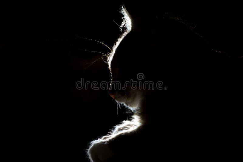 Silueta de un gato hermoso el dormir en un fondo negro fotografía de archivo libre de regalías