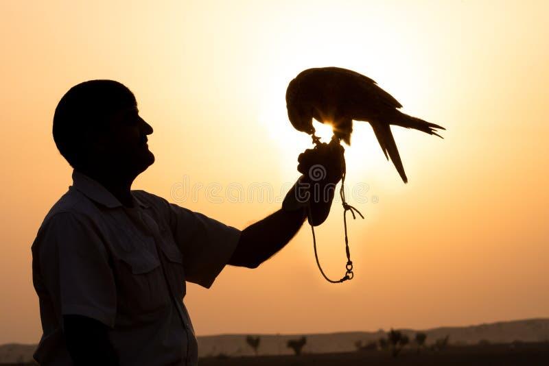 Silueta de un halcón contra una salida del sol imagen de archivo
