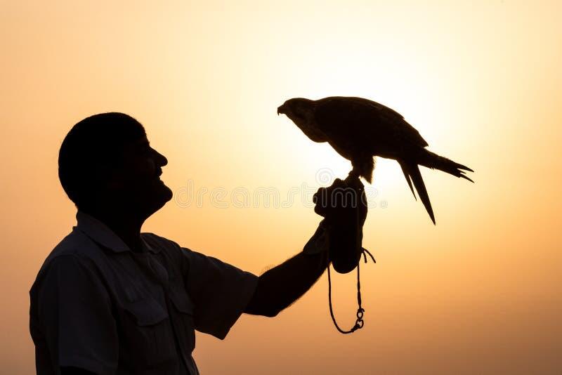 Silueta de un halcón contra una salida del sol foto de archivo libre de regalías