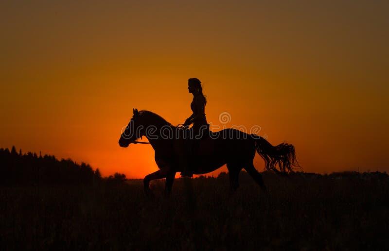 Silueta de un jinete de lomo de caballo en puesta del sol imagenes de archivo