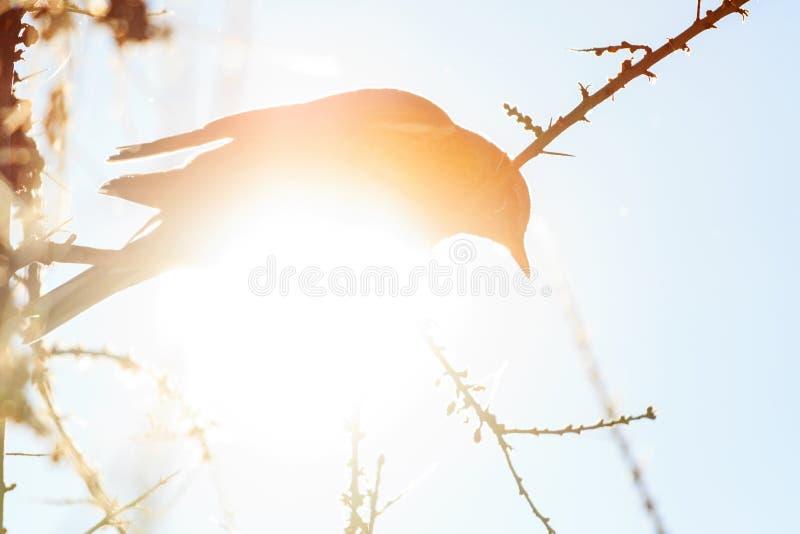 Silueta de un pájaro en un día soleado del invierno imagen de archivo
