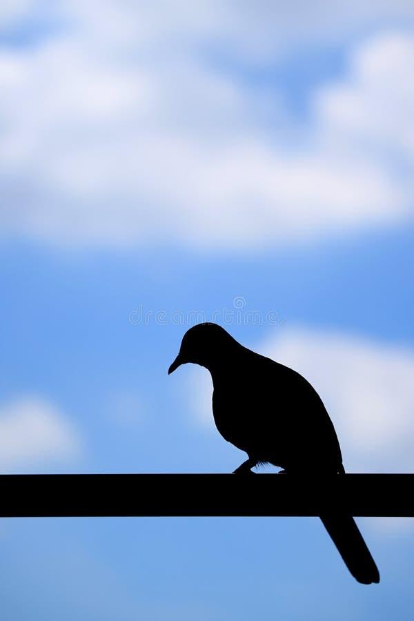 Silueta de un pájaro solo que se encarama en la cerca contra el cielo nublado azul, fondo borroso con el espacio libre para el te imagen de archivo