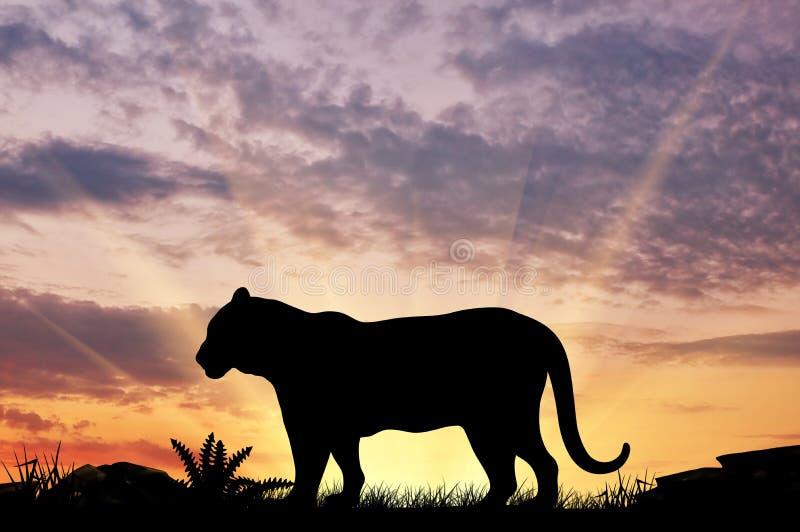 Silueta de un tigre fotografía de archivo