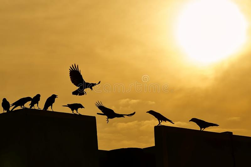Silueta de una escuela de cuervos imagenes de archivo