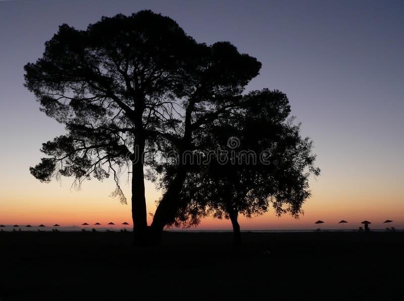Download Silueta del árbol foto de archivo. Imagen de sunrise, mediterráneo - 1295496