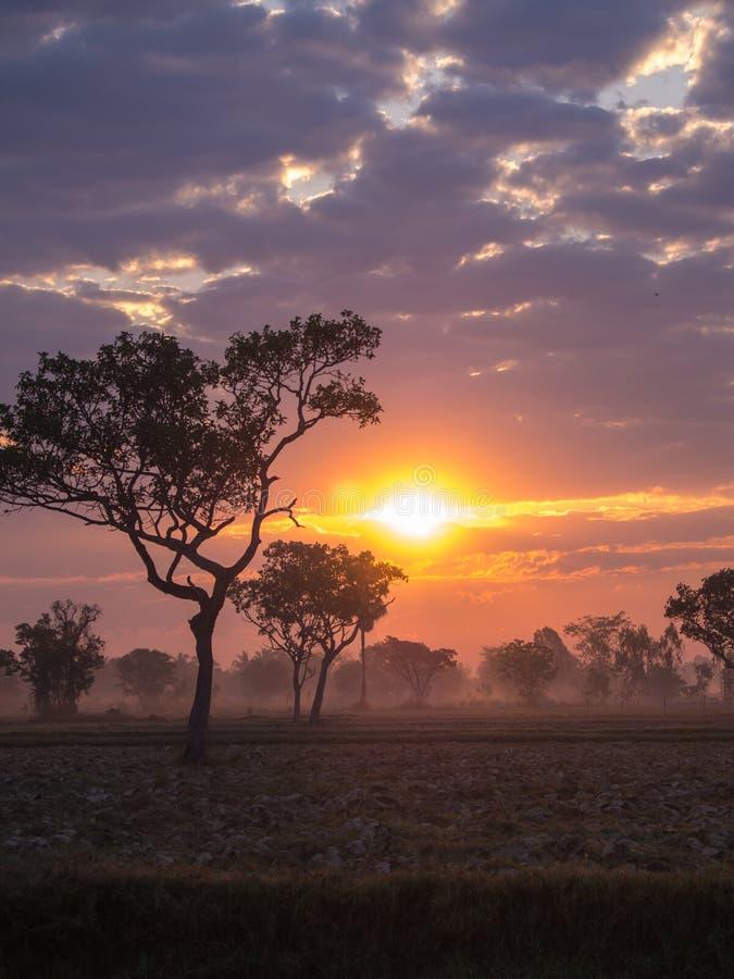 Silueta del árbol contra una salida del sol en campo fotos de archivo