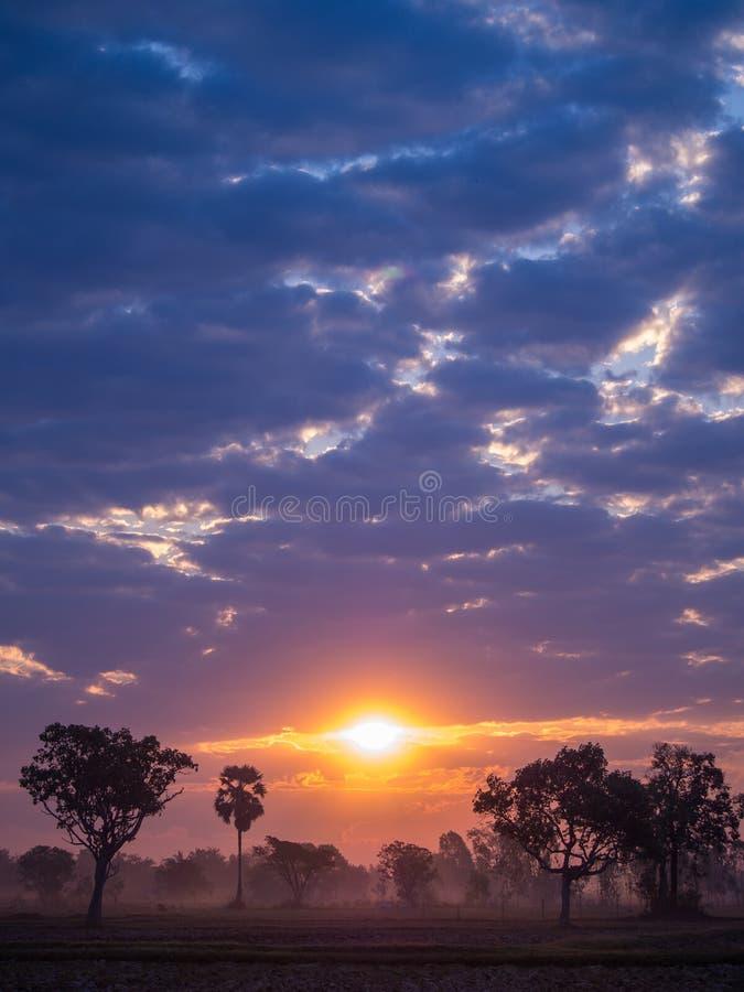 Silueta del árbol contra una salida del sol en nublado foto de archivo libre de regalías